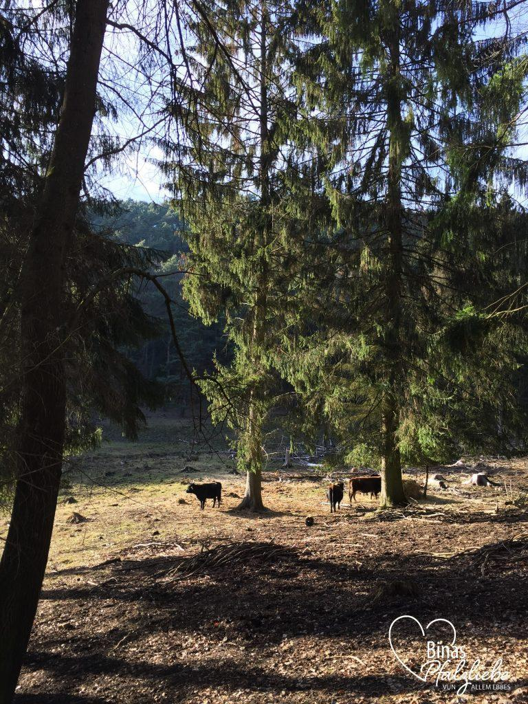 pfälzer wald wanderung auerochsenweg #wanderung #pfälzerwald #auerochsenweg #wanderlust #binaspfalzliebe