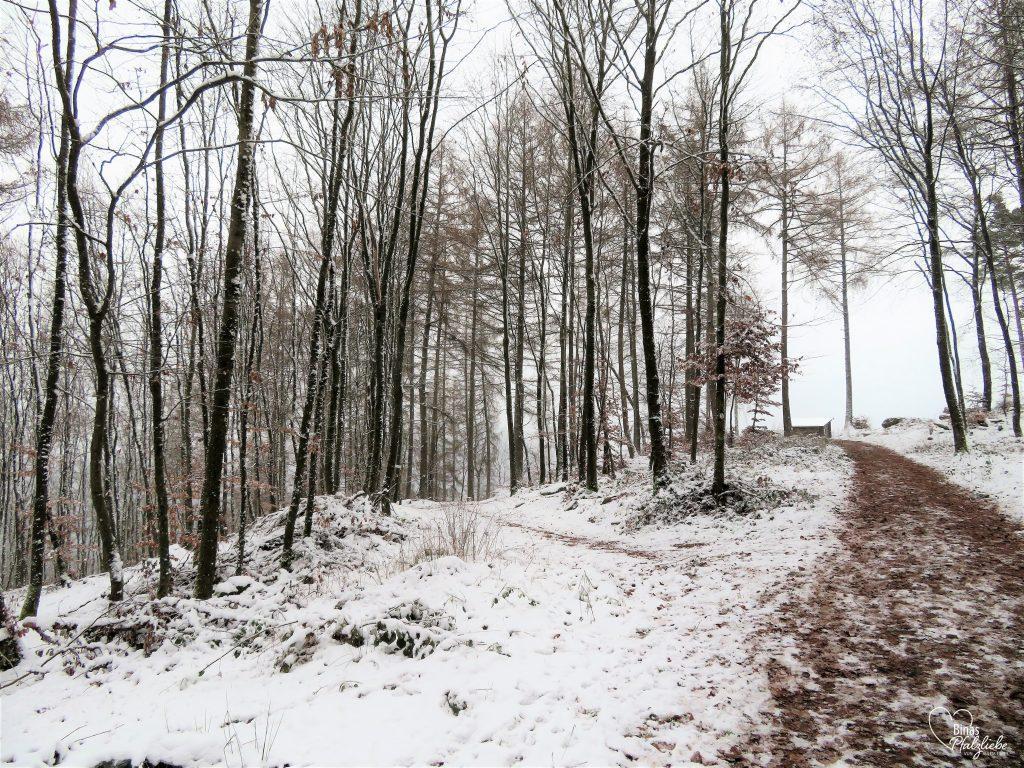 Weg zum Kirschfelsen bei Annweiler #wandertour #winter #kirschfelsen #annweiler