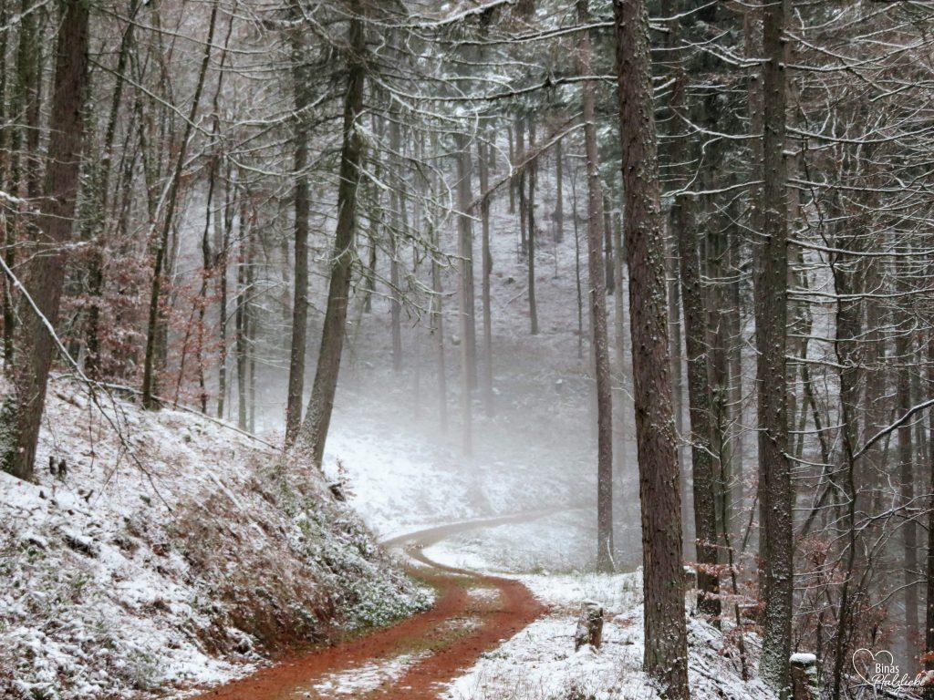 Waldweg Annweiler #wanderweg #wanderung #winter #wald #schnee #winterwald