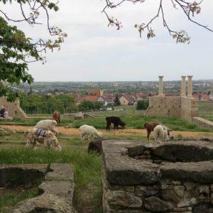 LaMa Land - Wandern in der Pfalz mal ganz anders