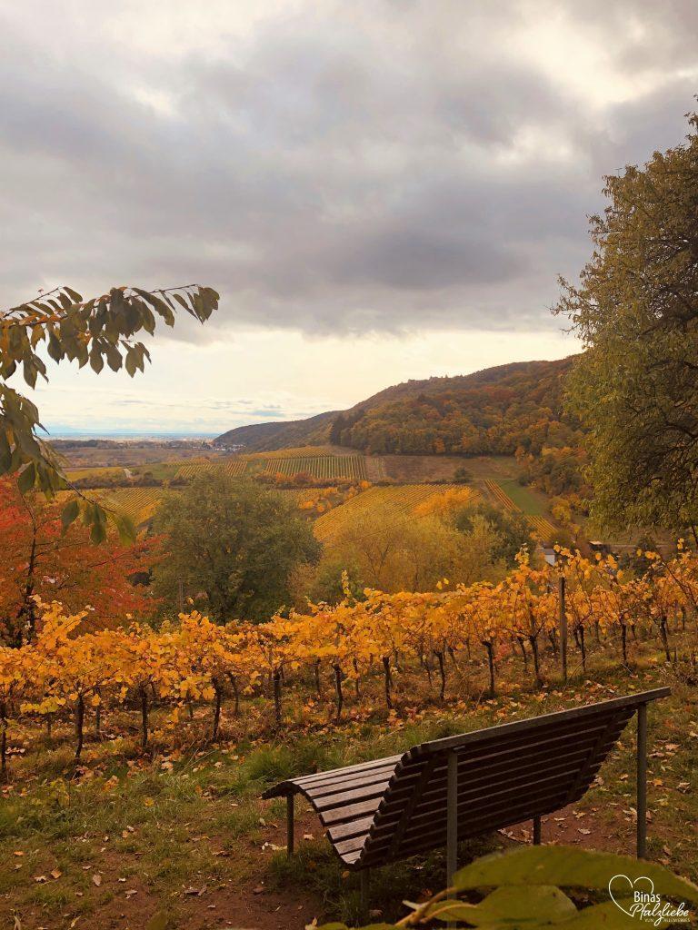 Panoramabank bei Leinsweiler mit Blick auf die Weinreben #leinsweiler #panorama #weinreben #pfalz #wandertour