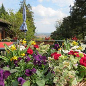 Binas Pfalzliebe: Meine Tipps für heiße Tage und laue Nächte (Pfälzer Sommer Teil I)