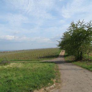 Weyher und Burrweiler Mühle