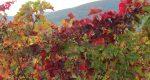 Pfälzer Herbst-Bucketlist