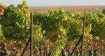 """Binas Pfalzliebe zu Gast beim """"Herbstlichen Kamingespräch"""" der Pfälzer Weinwirtschaft"""