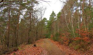 Unterwegs im Pfälzer Wald: Lindemannsruh - Ungeheuersee
