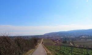Pfalzliebe-Spezial: Blog-Jubiläum und meine Februar-Favoriten!