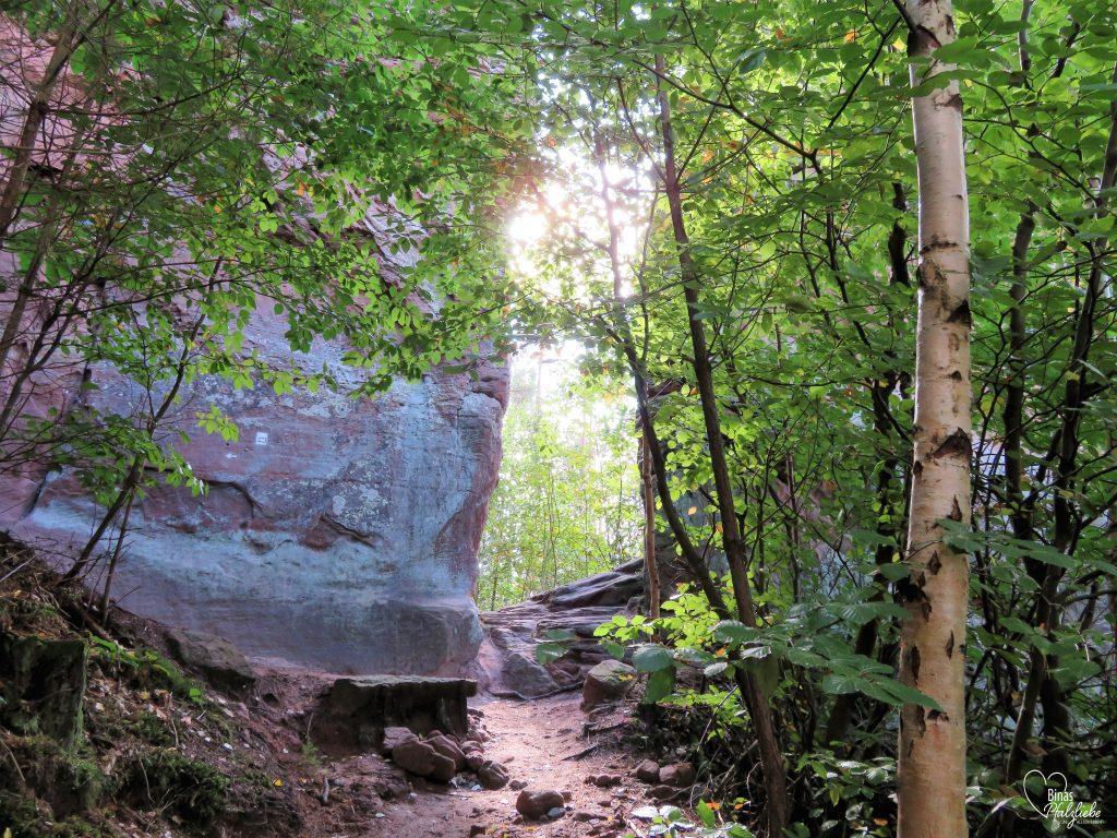 Waldweg zu den Geiersteinen #wald #pfälzerwald #waldweg #sandsteinfelsen