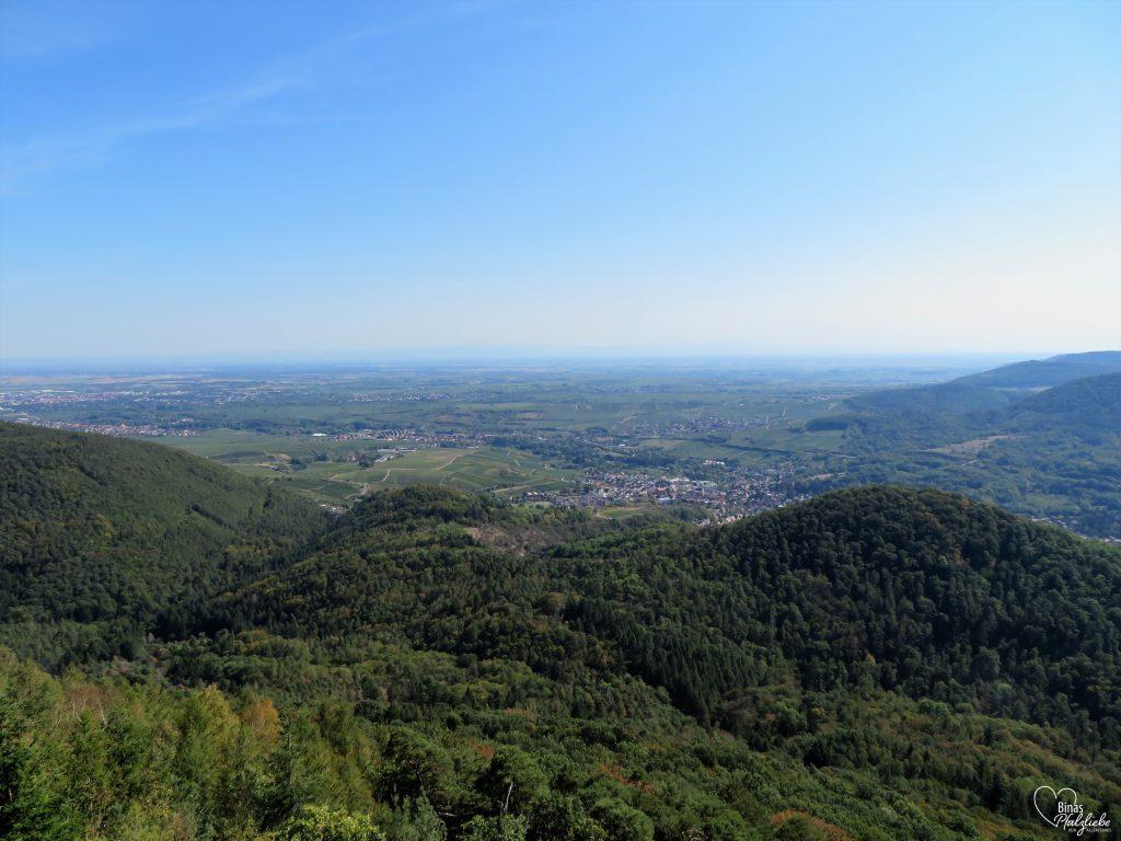 Blick vom Orensfelsen in die Rheinebene #südpfalz #orensfels #aussicht #rheinebene #wald #pfalz
