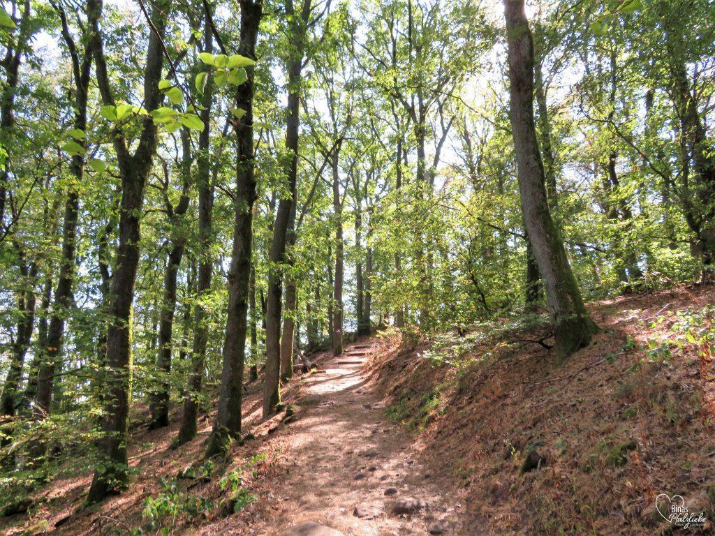 Waldweg zum Orensfelsen #wald #wandern #wandertour #wanderweg #pfalz #pfälzerwald