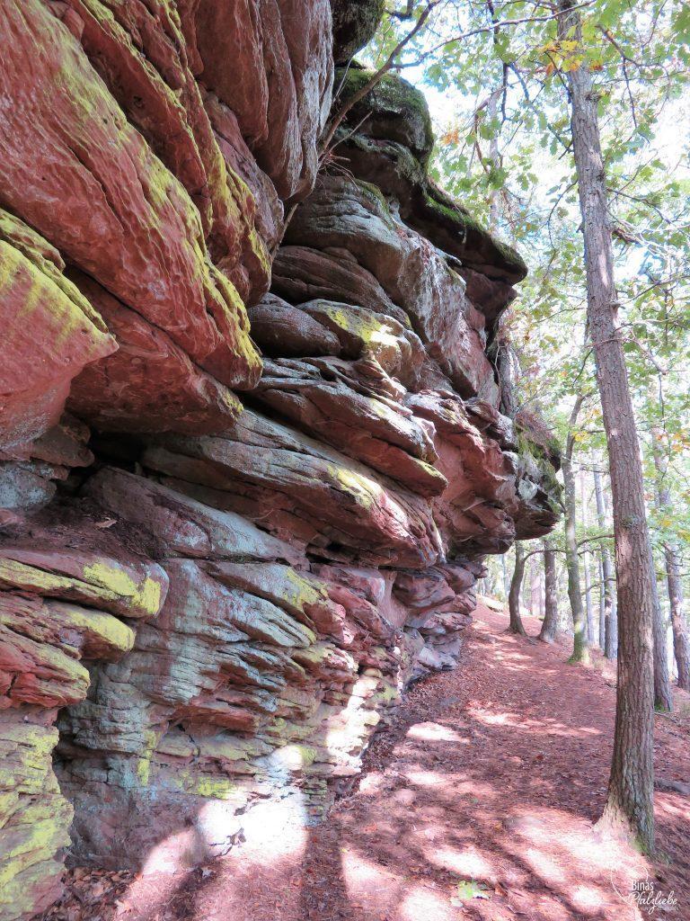 Sandsteinformation im Pfälzerwald #sandstein #pfälzerwald #waldweg #pfalz #wanderung