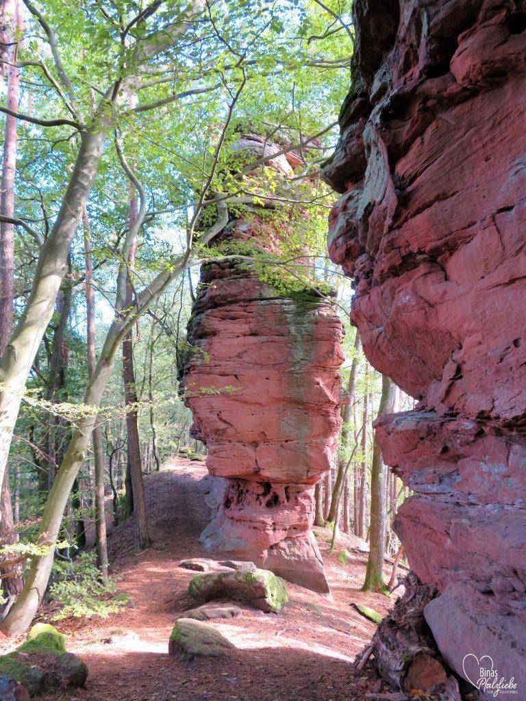roter Sandstein auf dem Weg zu den Geiersteinen #geiersteine #pfalz #südwestpfalz #waldweg
