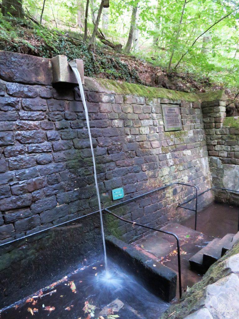 Historische Walddusche #walddusche #frankweiler #wald #waldweg #wandertour #wandern