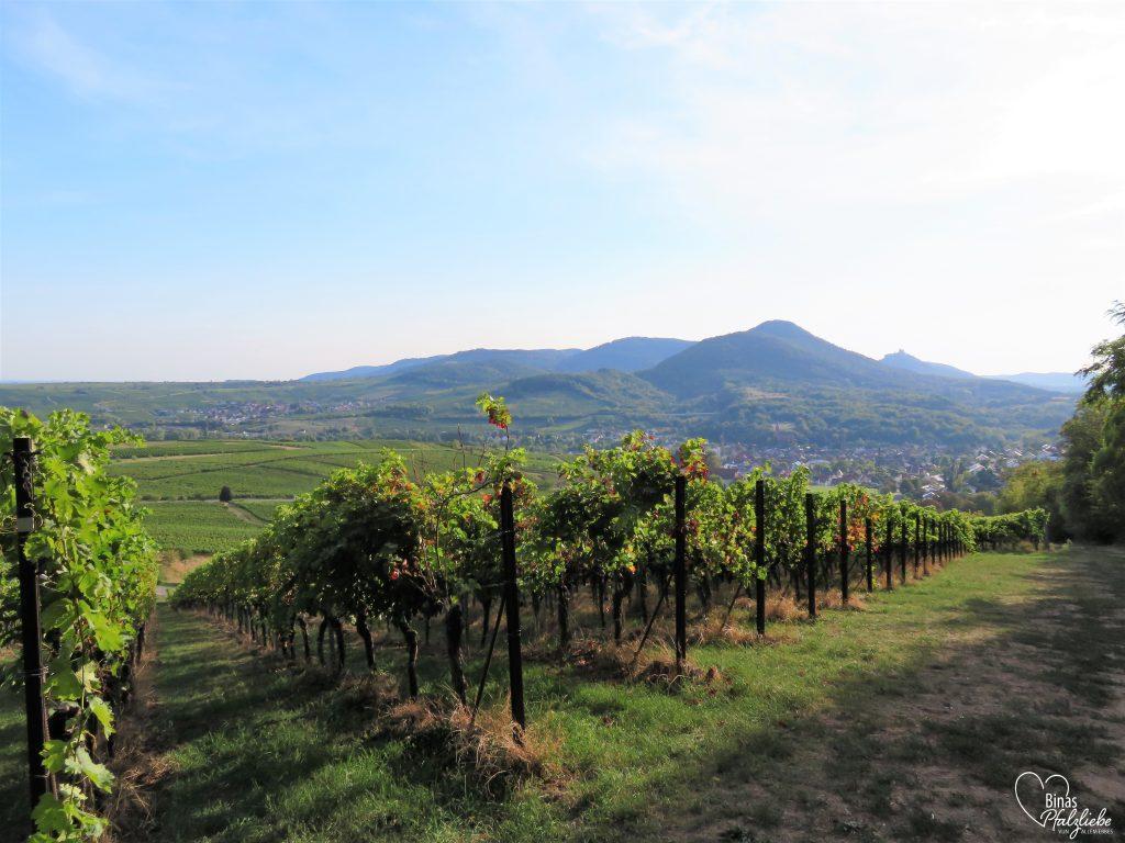 Aussicht über die Weinberge bei Albersweiler #albersweiler #südpfalz #weinberge #wein #weinreben #pfalz